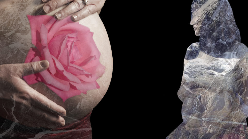 Brooke Mountain Rose